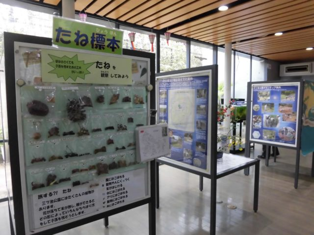 県立三ツ池公園 標本展示