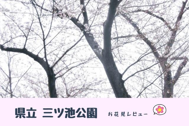 県立三ツ池公園 花見レビュー