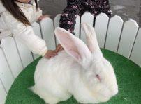 那須ハイランドパークの巨大ウサギ