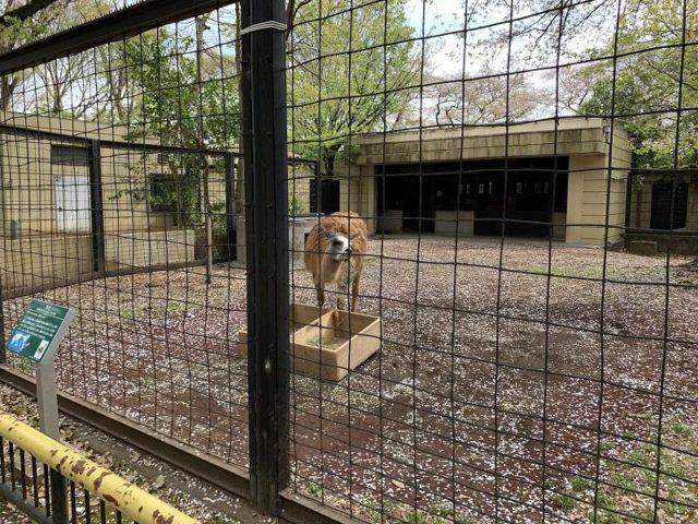 夢見ヶ崎動物公園のラマ