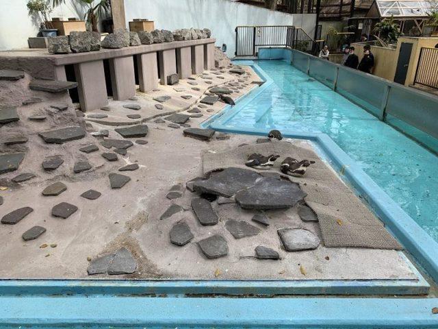 夢見ヶ崎動物公園のペンギンプール