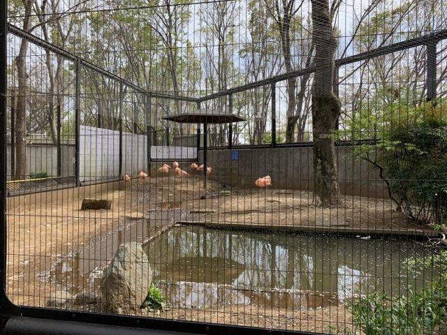 夢見ヶ崎動物公園のフラミンゴ