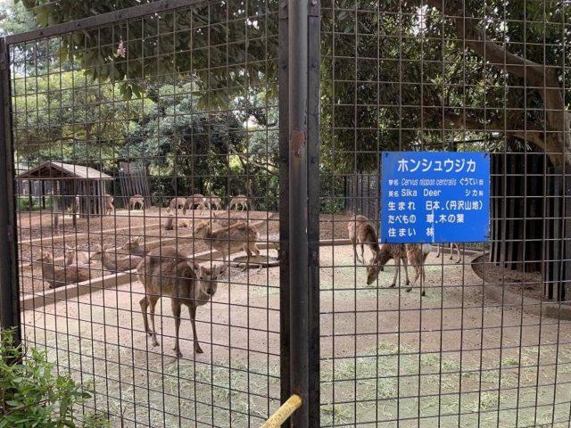 夢見ヶ崎動物公園の鹿